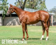BIg strong athletic colt that shows above average ability already!