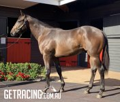 Lot 779 Gold Coast Magic Millions Yearling Sale