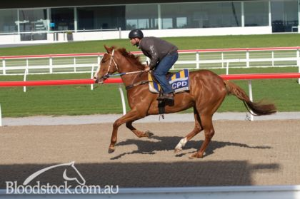 Golden Snake - Wicked Delight pre training at Pakenham course