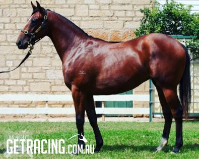 Lot 178 March Magic Millions Yearling Sale