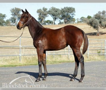YOUR SONG x MARGIE 'N' ME Weanling Filly