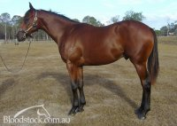 Daunting Lad x Octagonal Heights Yearling colt