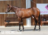 Foxwedge x Powerful Light Filly Conformation
