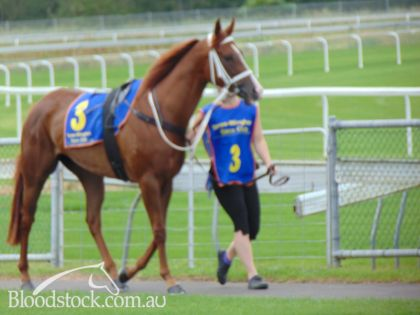 Taree Country Championships meeting
