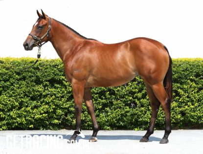 Hinchinbrook x Harmonized Feeling Filly - Conformation