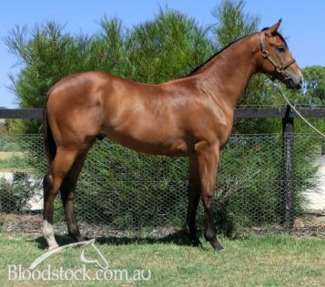 Lot 37 - Perth Yearling Sale