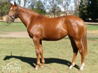 Mint Lane - Reelia Game filly