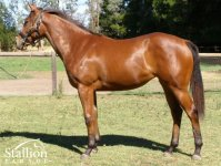 Mint Lane - Carpe Jugulum filly