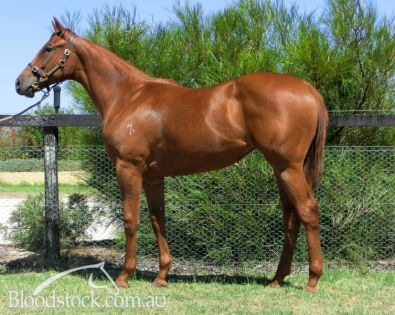 Lot 106 - Perth Yearling Sale