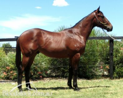 Lot 113 - Perth Yearling Sale