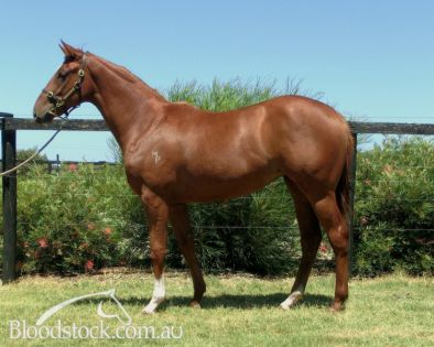 Lot 232 - Perth Yearling Sales