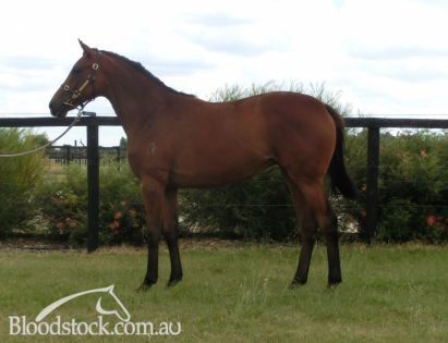 Lot 368 - Perth Yearling Sale