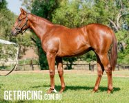 What a great looking yearling - like his sire Shooting To Win!!!
