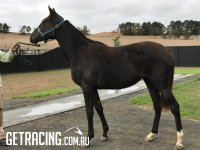 Look at her now....a beautiful athletic filly!!!