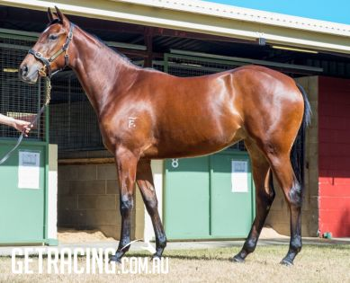 Magic Millions National Yearling Sale, June 2019