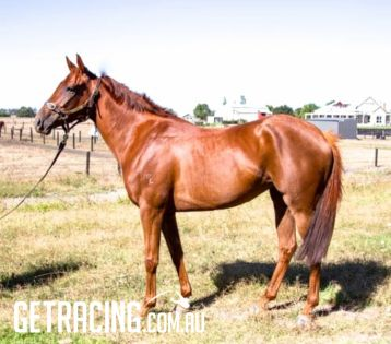 Golden Snake - Felony filly