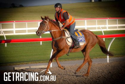 Golden Snake -Felony filly in pre training