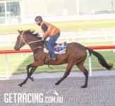Best Choice - Bedouin Thief filly
