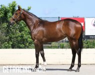 Vancouver x Noblest Filly - Conformation