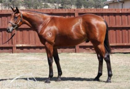 Miss Kentucky's 1/2 brother by Street Sense, sold for $200k at Inglis Premier 2013