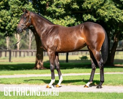 Exciting Zoustar filly out of City Winning Mare
