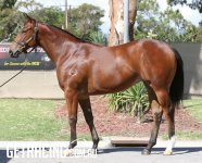Headwater x Crumbed 18 Filly - Conformation