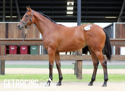 I Am Invincible x Parker's Piece Filly - Conformation
