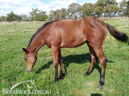 Unencumbered Weanling . Her half made $68,000