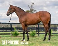 Exciting Zoustar Filly