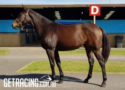Magnus x Tre Scalini Filly Conformation