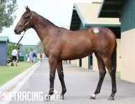 All Too Hard x Madam Butterfly Filly Conformation