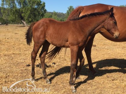 Cracking Spill the Beans filly!!!!!