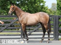 Dalghar x On The Board Colt - Conformation