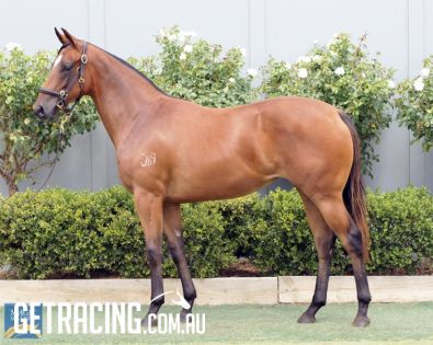 Precocious type out of Magic Millions winner!!!!