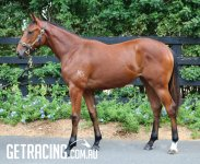 All Too Hard x High Class Filly - Conformation