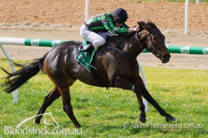 Winning her maiden by 2l over 1600m