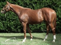 Pendragon x Geeta colt (half-brother to Gr.3 winner Marheta; sold for $60,000 at 2011 Inglis Easter Yearling Sale)