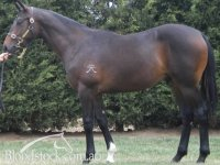 Ryes Above (Pendragon x Resonance colt as a yearling)