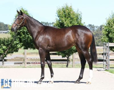 This filly is a terrific athlete with great presence!!!