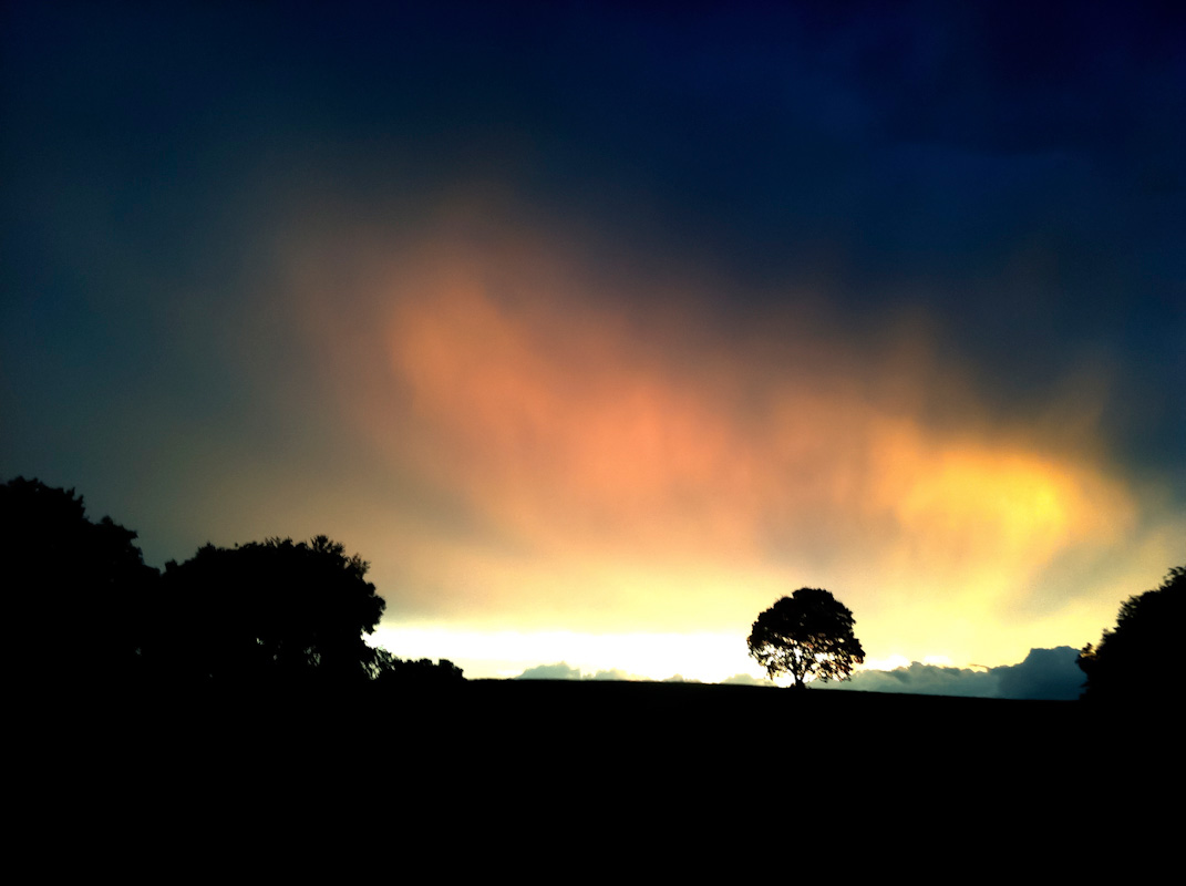 Silhouette of a tree just after a storm at sunset