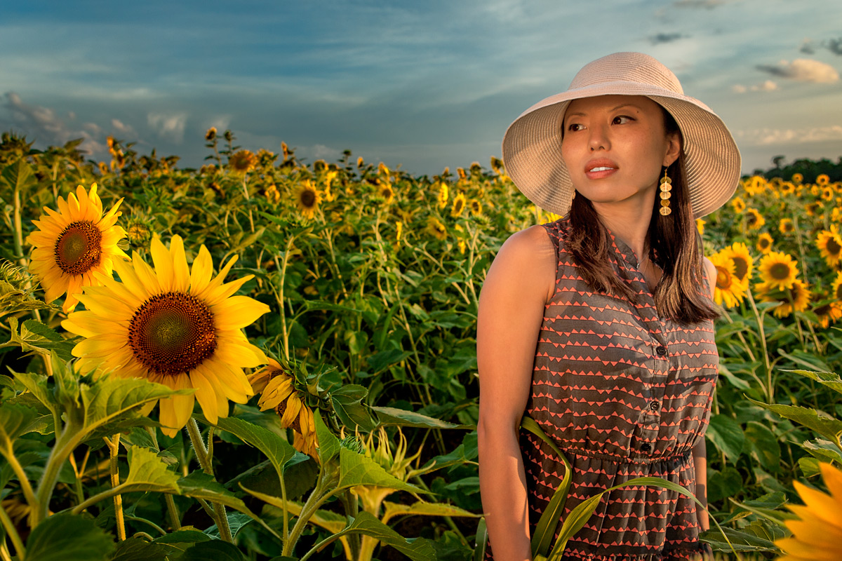 Sunny in a field of Sunflowers