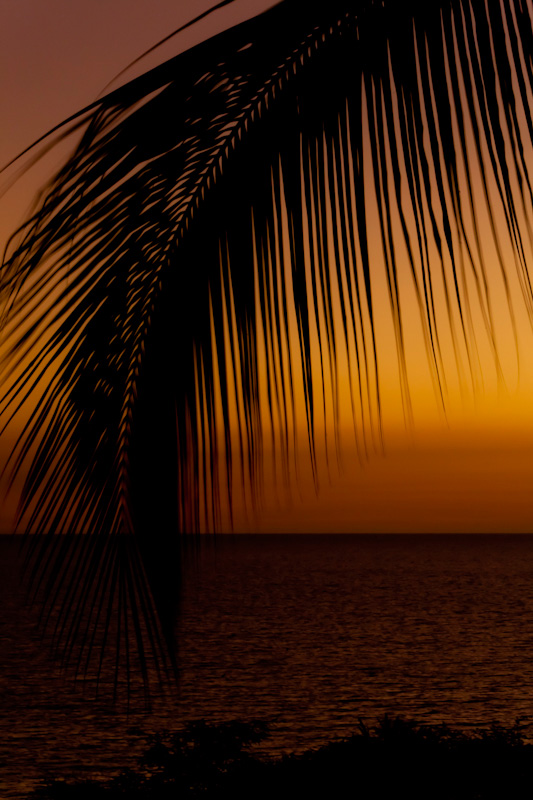 A palm from a palm tree silhouettes a sunset