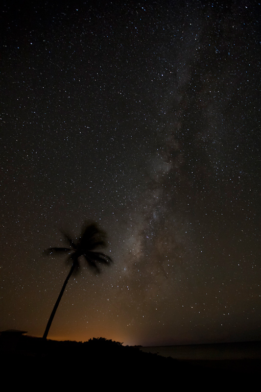 A palm tree silhouetted on a starry night with the visible Milky Way