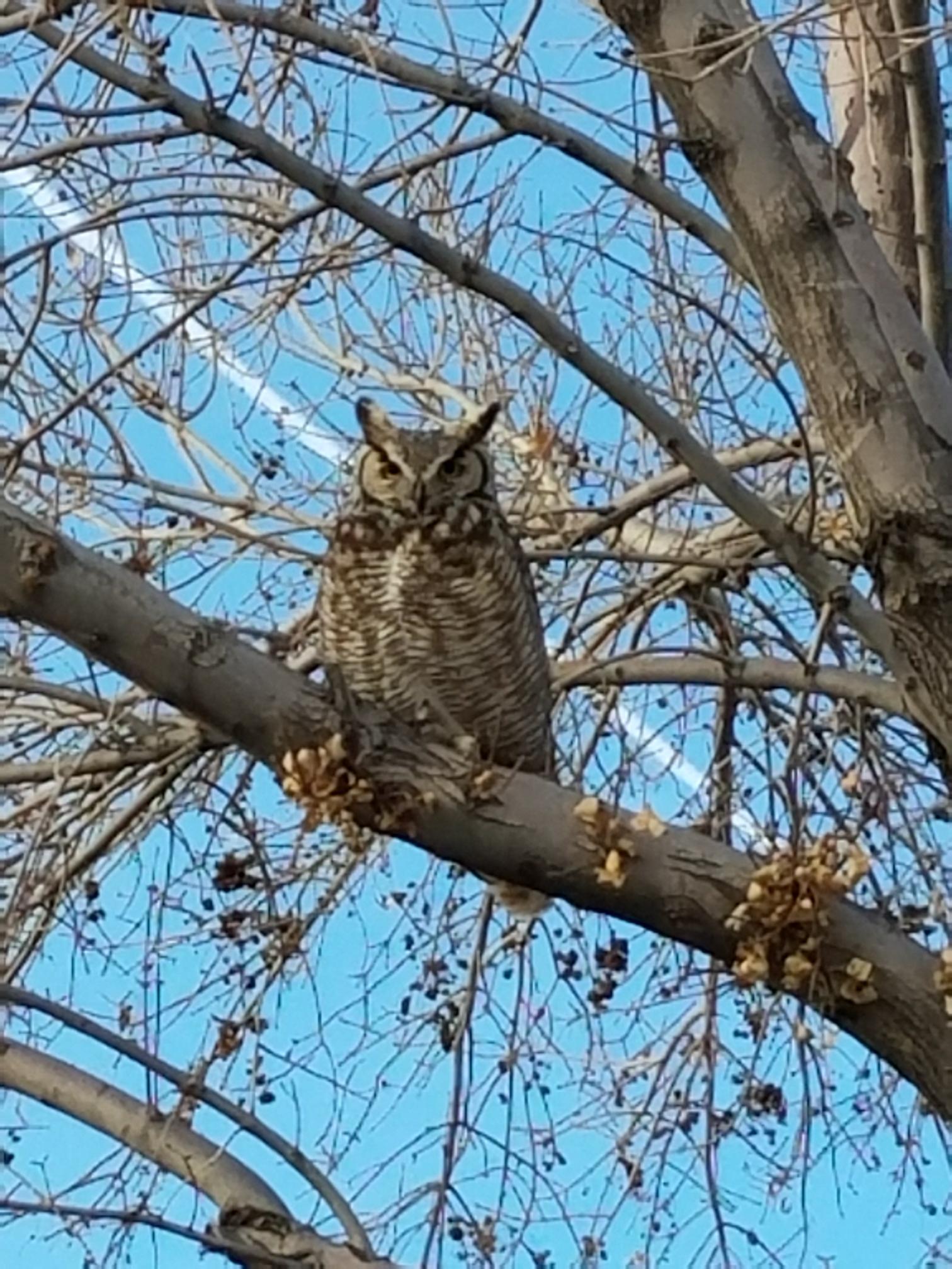 Napoli st. Owl