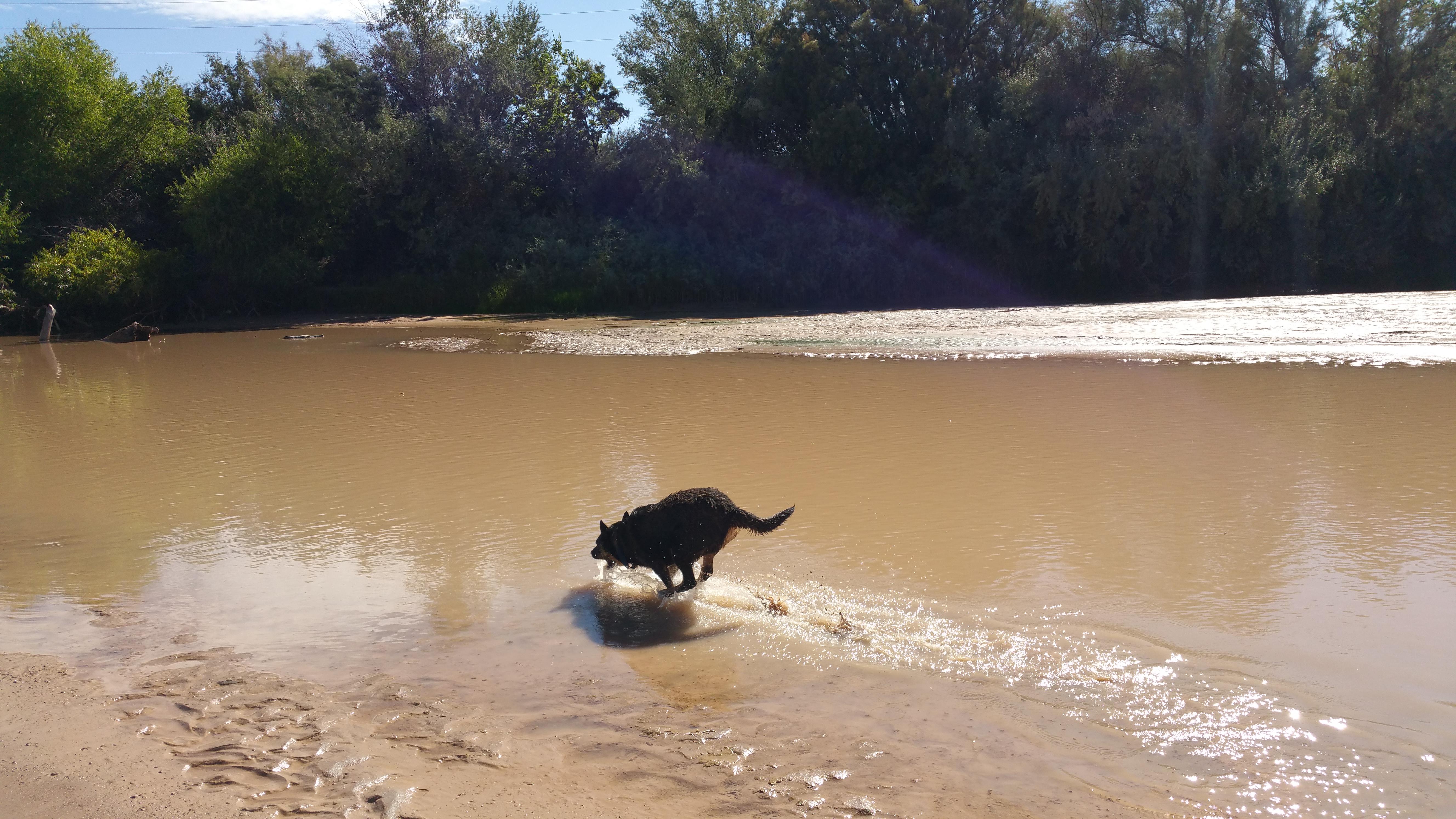 Ladyhawk & the Rio Grande