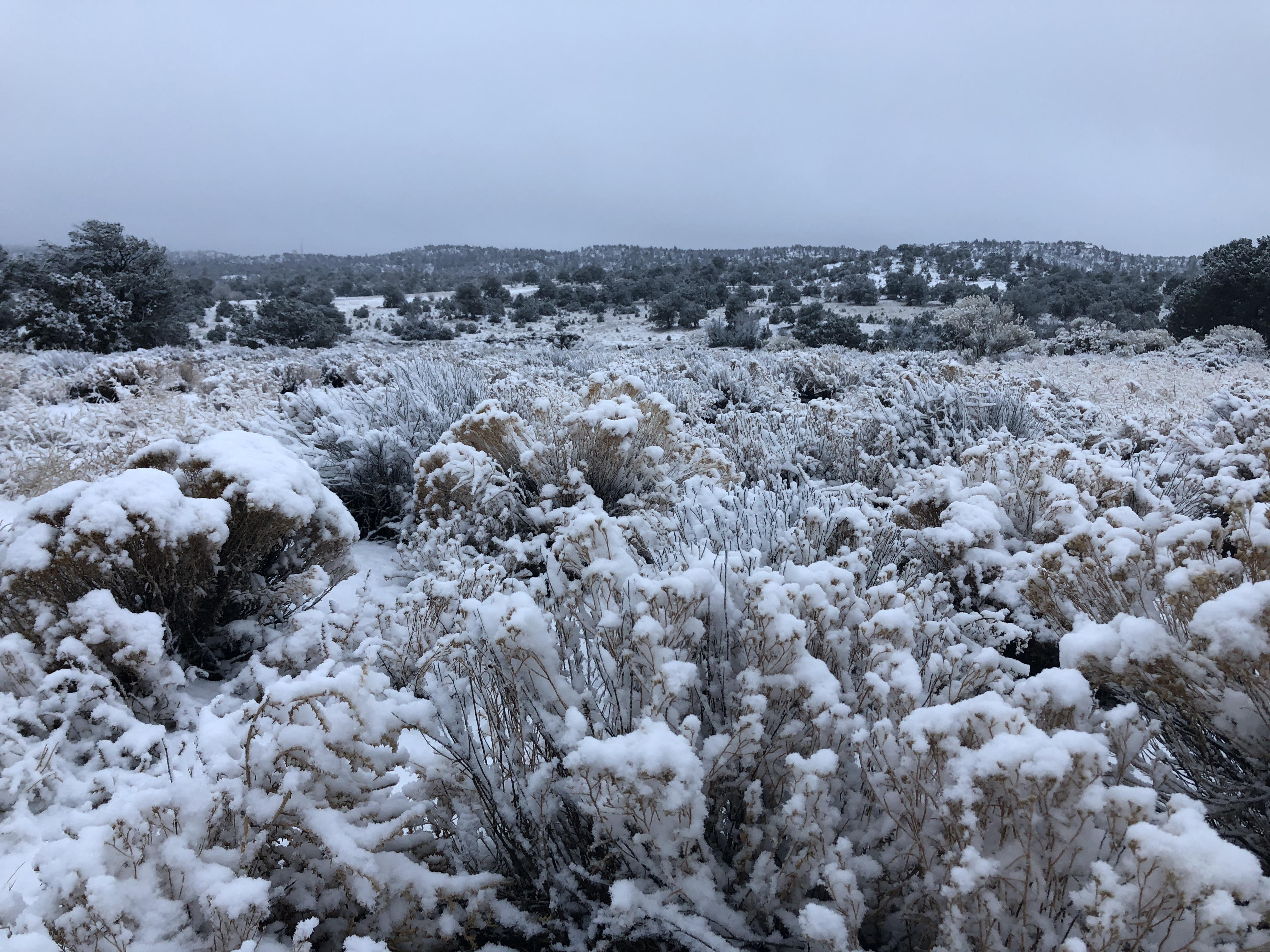 Morning Snowfall...
