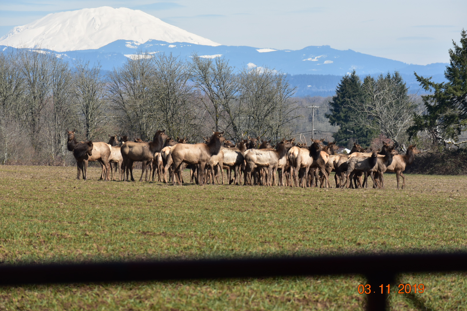 Nice day for a herd of elk