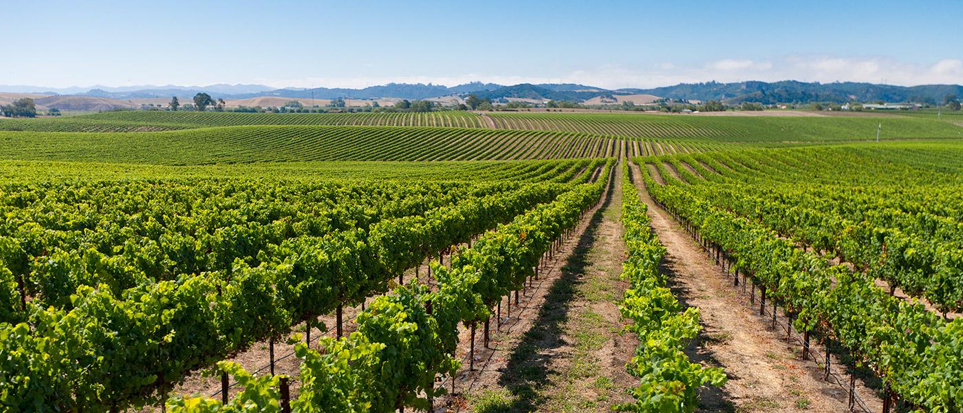 Wine Clubs Edna Valley Vineyard