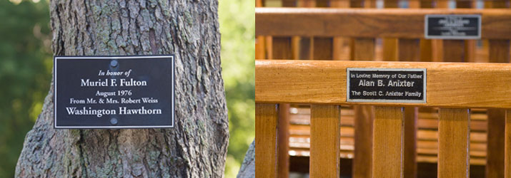 Dedicate a Tree or Bench at Ravinia