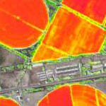 NVDI Index Agriculture Mapping